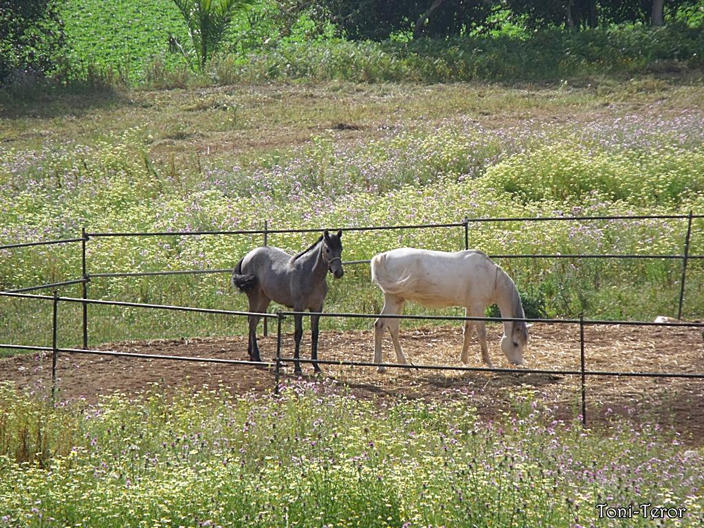 cerca para caballos