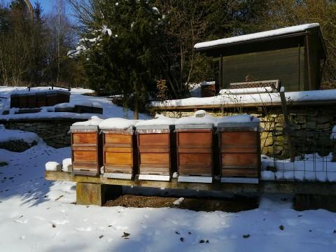 Calendario apicultura